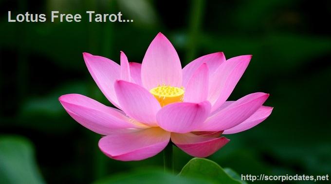 Lotus Free Tarot